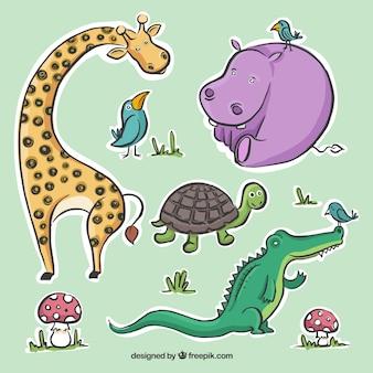 Colección El plano animal
