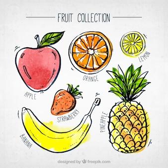 Colección fantástica de piezas de fruta de acuarela