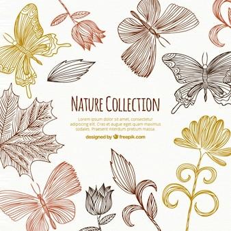 Colección floral dibujado a mano