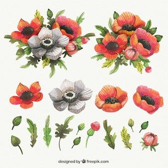 Colección linda de amapolas de acuarela