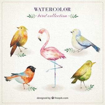 Colección linda de pájaros de acuarela
