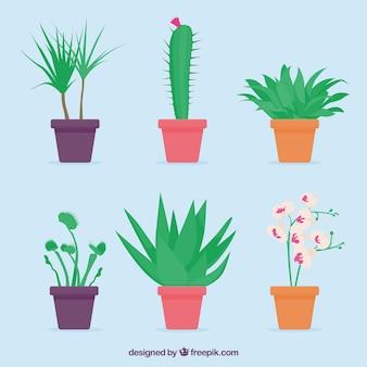 Colección natural de plantas decorativas