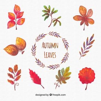 colección pintada a mano de hojas de otoño