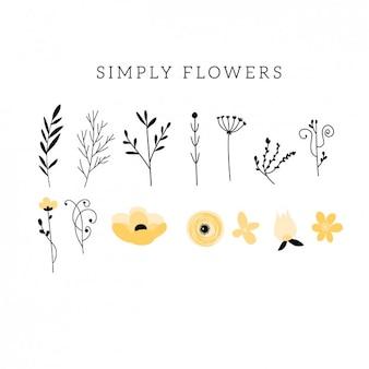 Collección plana de flores y hojas