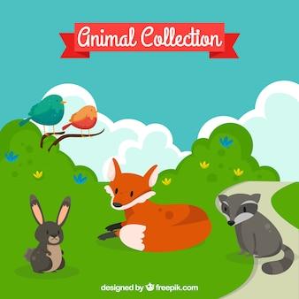 Conjunto de animales del bosque en la naturaleza