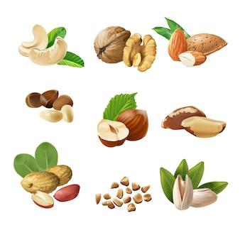 Conjunto de iconos vectoriales de frutos secos