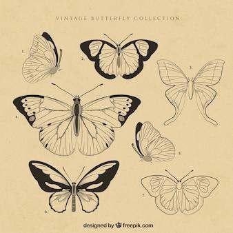 Conjunto de mariposas vintage