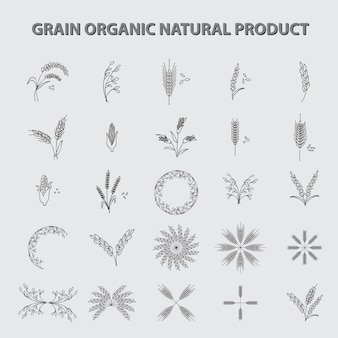 Conjunto de producto orgánico natural de grano