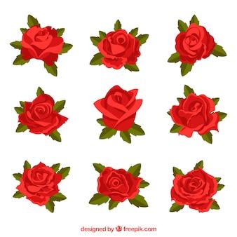 Conjunto de rosas rojas