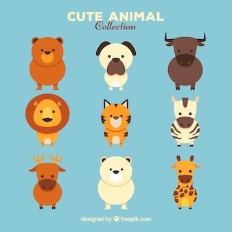 Conjunto especial de animales bonitos