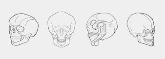 Cráneos blancos y negros dibujados mano fijados