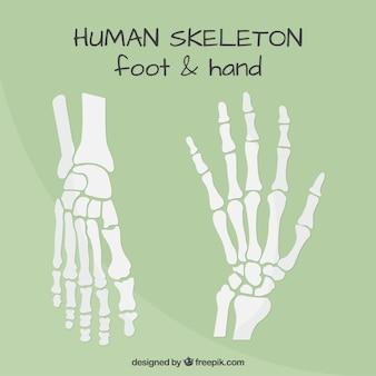 De pies y manos los huesos