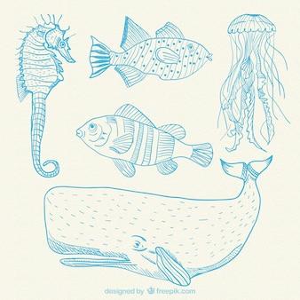 Dibujado a mano animales marinos