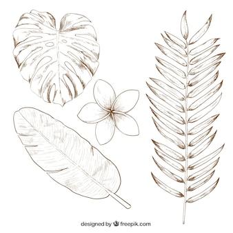Dibujado a mano las hojas tropicales