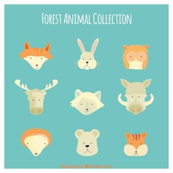 dibujado colección animal salvaje lindo mano