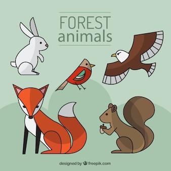 Dibujados a mano animales del bosque con estilo lineal