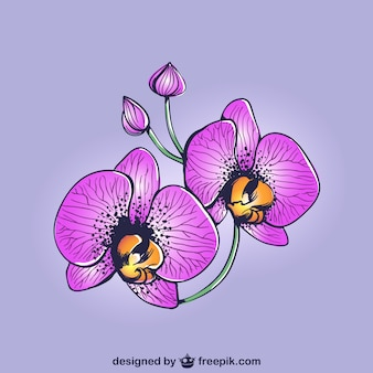 Dibujo de orquídeas moradas