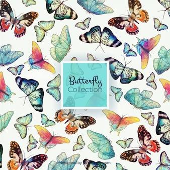 Diferentes mariposas de acuarela