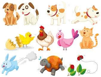 Diferentes tipos de animales domésticos ilustración