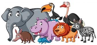 Diferentes tipos de animales salvajes
