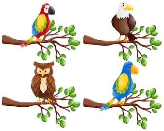 Diferentes tipos de aves en la rama