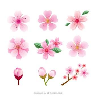 Diferentes tipos de flores de cerezo