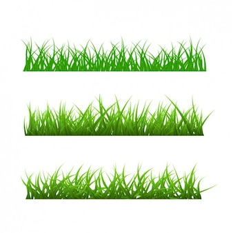 Diferentes tipos de hierba
