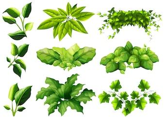 Diferentes tipos de hojas ilustración
