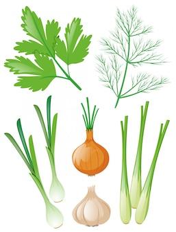 Diferentes tipos de verduras en blanco