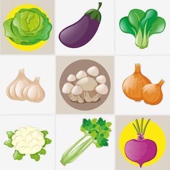 Diferentes tipos de verduras frescas