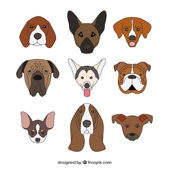 Diseño de colección de perros