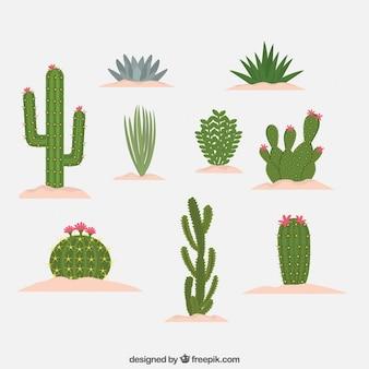 Diseño de diferentes tipos de cactus