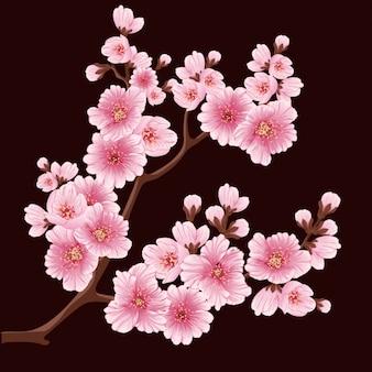 Diseño de fondo de flor de cerezo