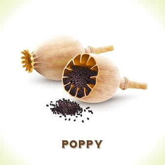 Diseño de fondo de semillas de amapola