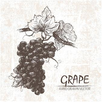 Diseño de uvas dibujadas a mano