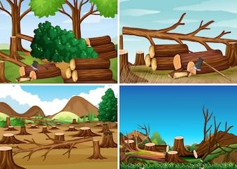 Escenas de deforestación con maderas picadas