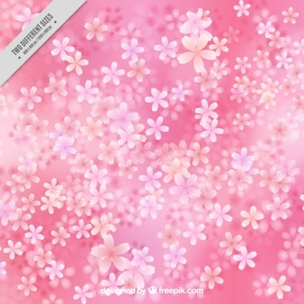 flor de cerezo sobre un fondo de color rosa