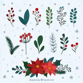 Flor de pascua con otras plantas decorativas de invierno