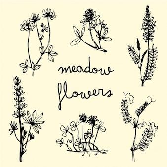 Flores de prado dibujadas a mano