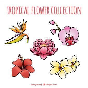 Flores exóticas y bonitas dibujadas a mano