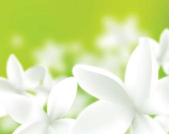 flores frescas blanco aislado verde