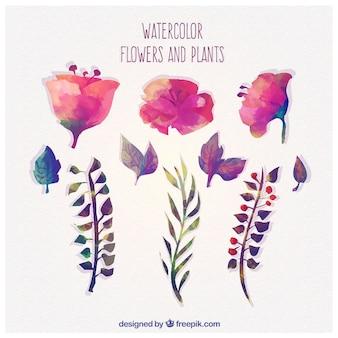 Flores y plantas de acuarela