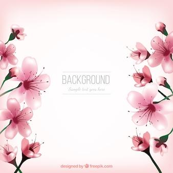 Fondo bonito de flores de cerezo