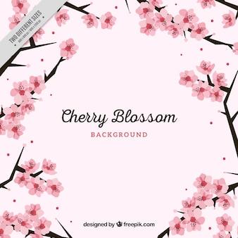 Fondo bonito de flores del cerezo