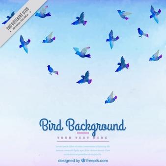 Fondo de acuarela con pájaros azules