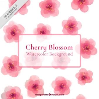 Fondo de bonitas flores de cerezo de acuarela
