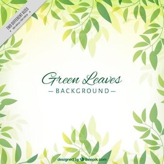 Fondo de bonitas hojas verdes dibujadas a mano