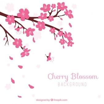 Fondo de bonito cerezo en flor