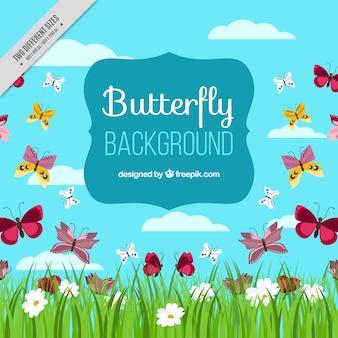 Fondo de campo con mariposas y flores