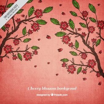 Fondo de cerezos dibujados a mano